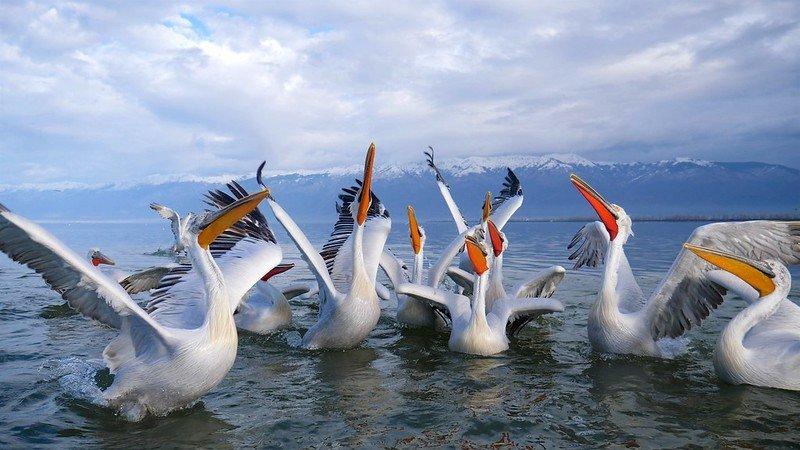 rare birds at Lake Kerkini - greek lake vacation
