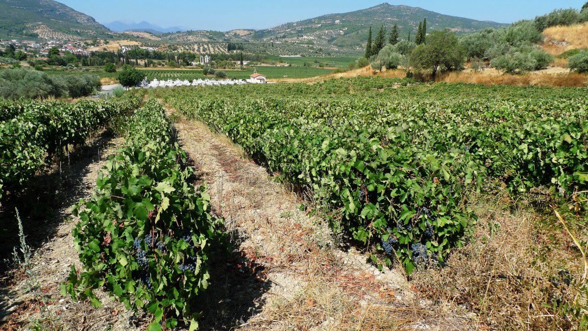 Nemea - Peloponnese , hiking trails